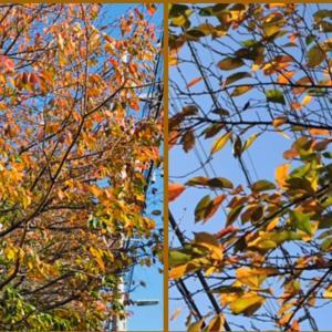季節の変わり目|嗅覚障害・味覚障害とひどい頭痛