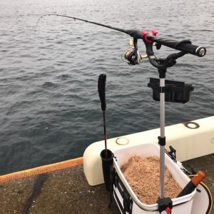 グレ釣り練習…?