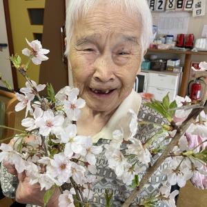 🌸もう恋しい桜🌸