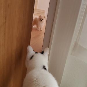 アイビーちゃん猫さんに遭遇する