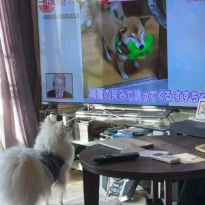 YouTube動画③