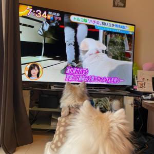 テレビを観る犬達