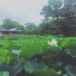 梅雨らしい日々/ 6月の庭