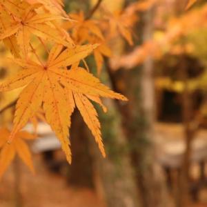 三重県四日市市の知る人ぞ知る紅葉の名所。水沢もみじ谷
