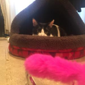 猫大興奮の定番おもちゃ