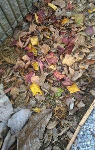 コーヒーかす堆肥と腐葉土作り