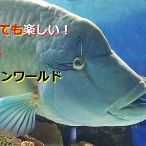 城崎マリンワールドには魅力がいっぱい!アジ釣りが特におすすめ!