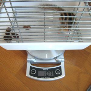 体重測定 12月1日