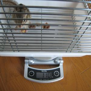 体重測定 1月20日