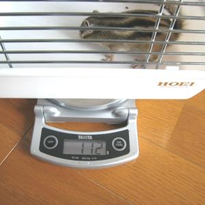 体重測定 2月16日