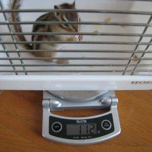 体重測定 4月5日