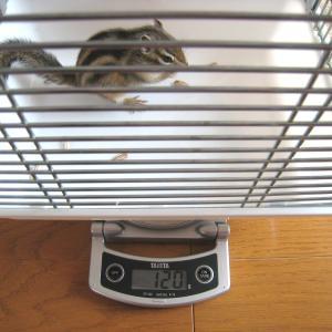 体重測定 5月24日