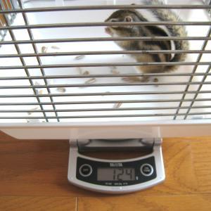 体重測定 6月14日(15日)