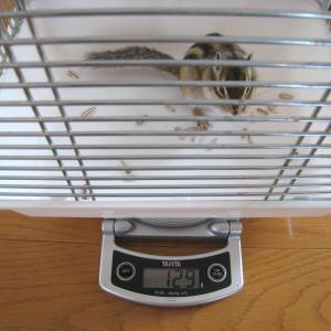 体重測定 6月28日
