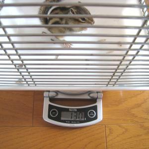 体重測定 7月5日