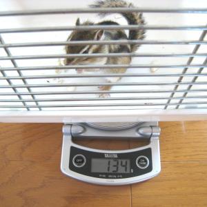 体重測定 7月19日