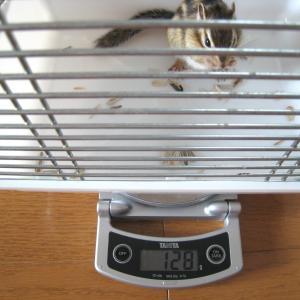 体重測定 7月26日