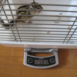 体重測定 8月2日