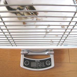 体重測定 8月9日