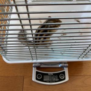 体重測定 2月14日