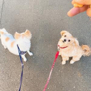 犬ブログ感出してみる╰( U ・ᴥ・)m