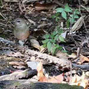 久方ぶりの「小鳥の森」