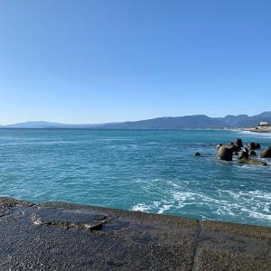 11月30日 夕まずめまでのポイント探り|梅沢海岸 釣り情報 ベラ イワシ