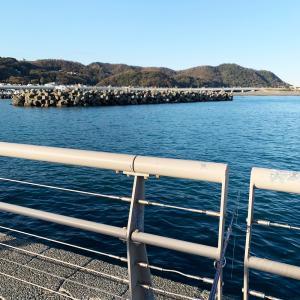 11月30日 大磯港 カサゴ サビキ釣り|大磯港釣り情報
