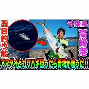 アマダイとカワハギ狙ったら青物が喰った!! in 千葉県 高崎港