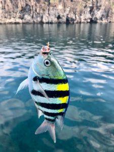 【八丈島釣りシリーズ】藍ヶ江港 朝まずめ #1