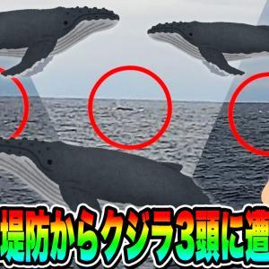 【ホエールウォッチング】釣り中に堤防からクジラ3頭に遭遇した!! in 八丈島