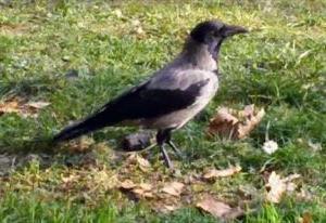 気になった鳥獣被害ニュース