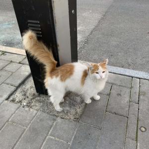 バクーのかわいい猫!?