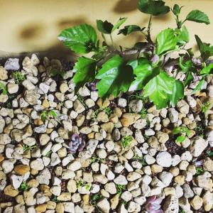 リクガメの餌になる室内で育てられる植物3種