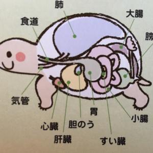 リクガメの体の不思議[首と甲羅の不思議]