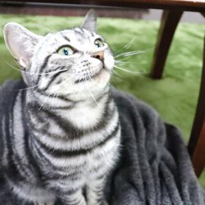 タマ、初めての猫の日
