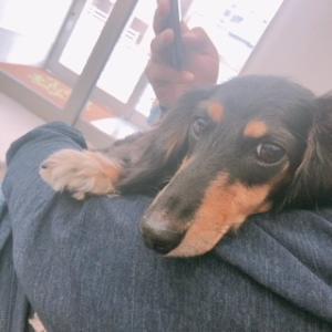 犬の慢性膵炎・慢性腸炎