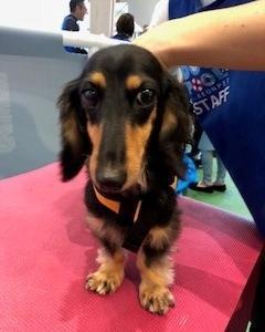 【体験✎】愛犬のプール体験