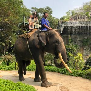 初タイ旅行②象乗り!Samphran Elephant Ground And Zoo