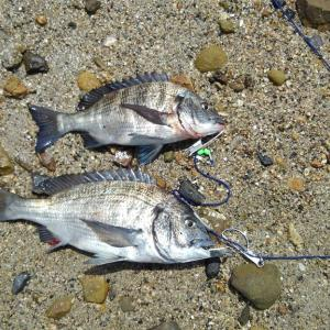 ノッコミ釣行⑫三重 ランガン