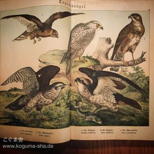 もう一冊来た!大きなドイツのアンティーク図鑑のご紹介その2
