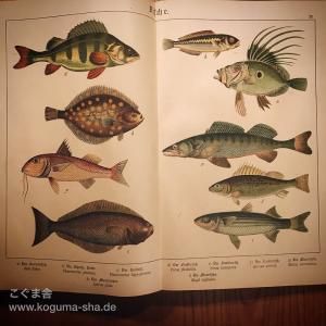 もう一冊来た!大きなドイツのアンティーク図鑑のご紹介その3