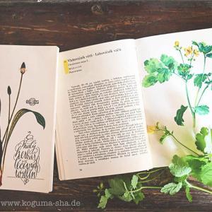 チェコスロバキアの植物図鑑と薬用植物の本をオンラインショップにアップしました。