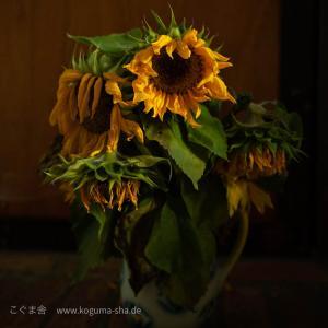 夏のお花といえば、、、、