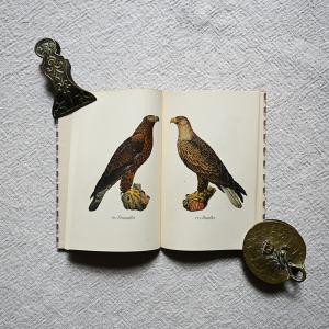 インゼル文庫515番、猛禽類図鑑をショップにアップしました。