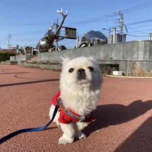 無言の訴え・・ 鹿児島県大崎町