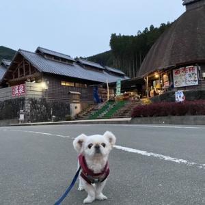 日本三大急流のひとつ球磨川・・ 熊本県芦北町