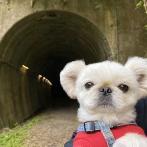 廃線跡のトンネル・・ 熊本県小国町(道の駅 小国)