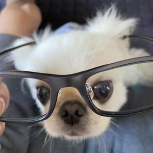 メガネ・・