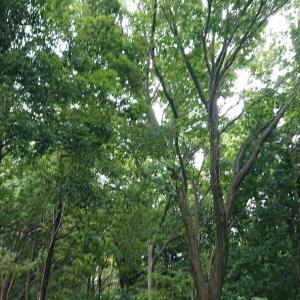りん散歩#87〈森林と田園の緑区さんぽ編②〉